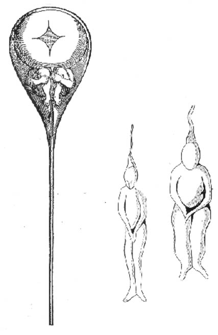 A tiny person inside a sperm as drawn by N. Hartsoecker in 1695