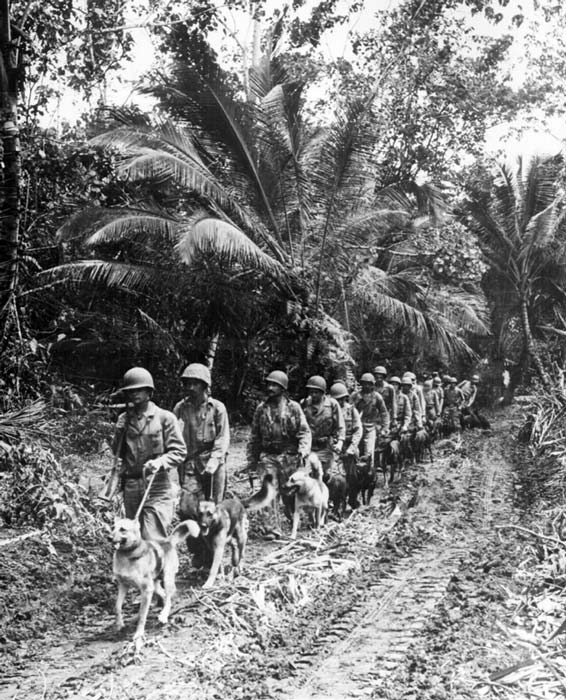 U.S. Marines and their dogs, used for scouting and running messages in WWII. (Marion Doss / CC BY-SA 2.0)