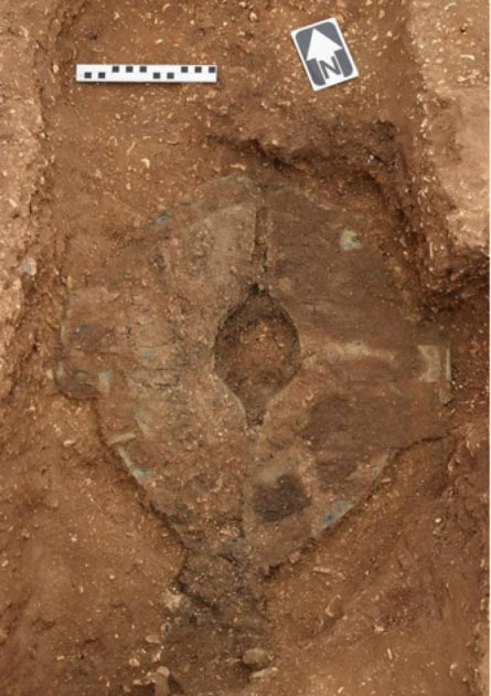 The warrior shield unearthed before conservation work had been completed (MAP Archaeological Practice Limited)