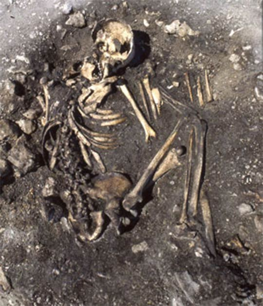 A woman of the Pitted Ware Culture in the tomb field of Ajvide in Gotland represents a burial influenced by the Battle Axe Culture   Source: Photo by Göran Burenhult, (Uppsala University)